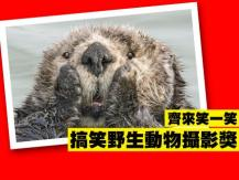 Comedy Wildlife Photo Awards 搞笑野生動物攝影獎